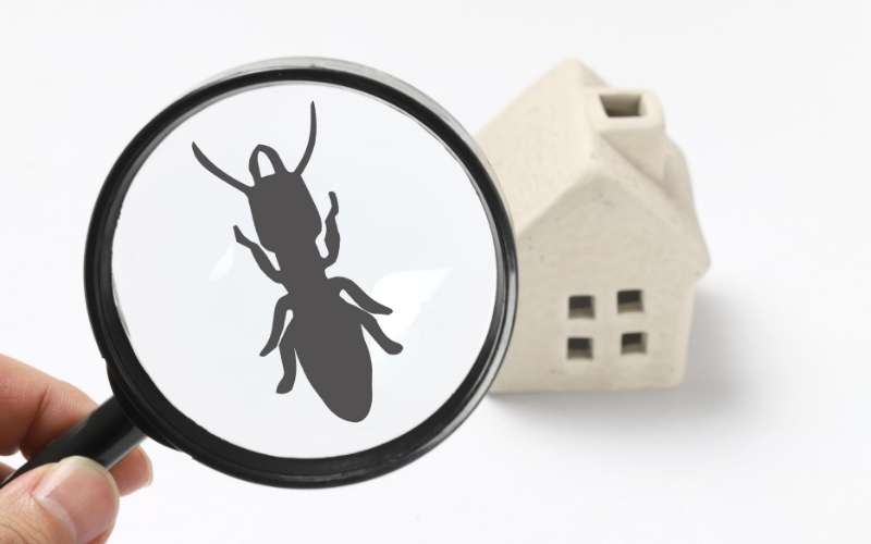 Who pays for a termite inspection on a VA loan in Florida, Alabama, or Texas